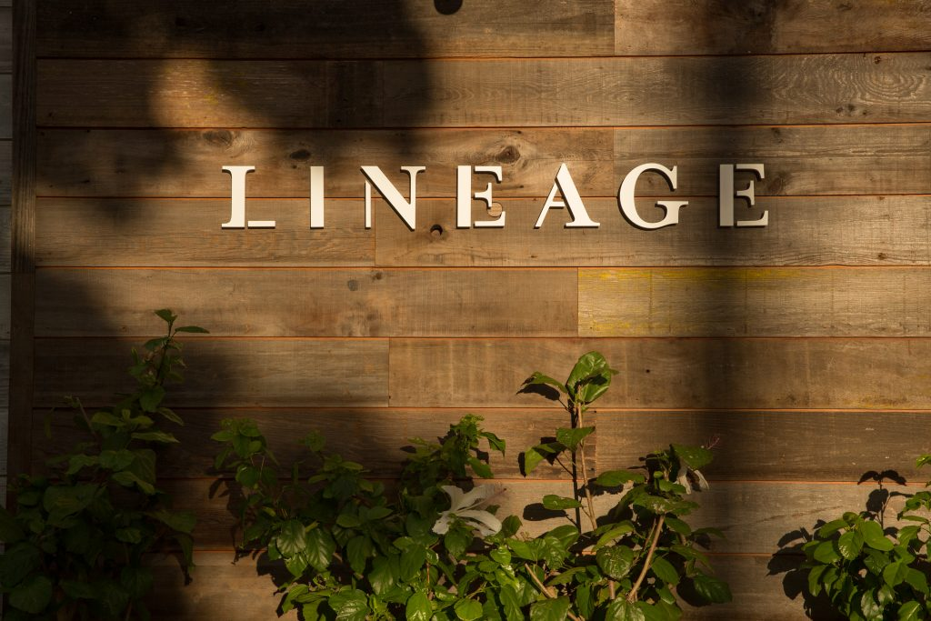 Lineage S Grand Opening Today Menu Magazine